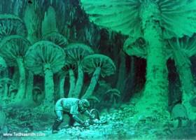 Mushroom Gatherer (MECCG)