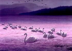 Three Nights on the Lake